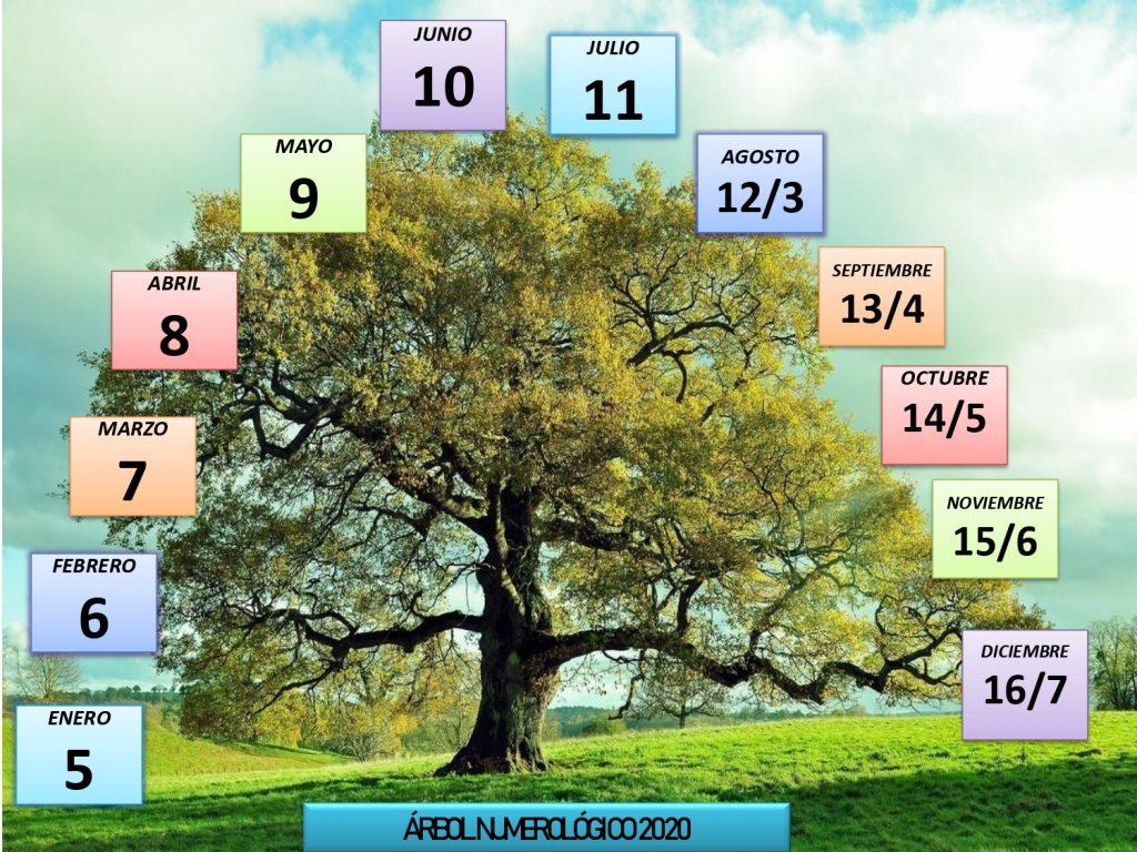 arbol numerologico
